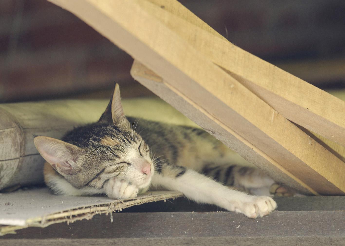 阿嬤家的貓